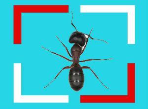 Karınca İlaçlama
